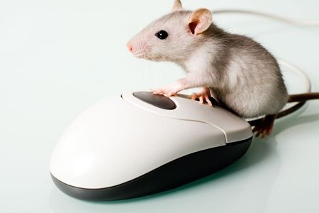 mouse and computer mouse